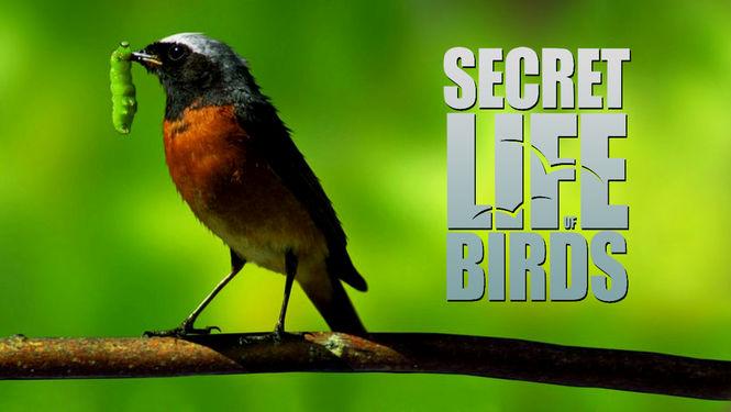 مستند زندگی اسرار آمیز پرندگان – The Secret Life of Birds 2011